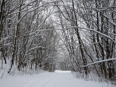 path through wintry forest