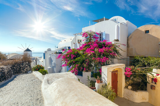 Famous Oia street with blooming flowers in the summer, Santorini, Greece