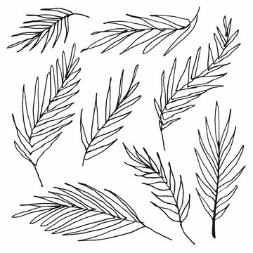 Hand drawing of palm leaves