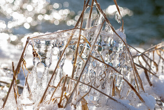 Abstract sculpture in nature of ice covered dry reed at the bank of a small river in winter, close-up, selective focus, lens flare in the background.
