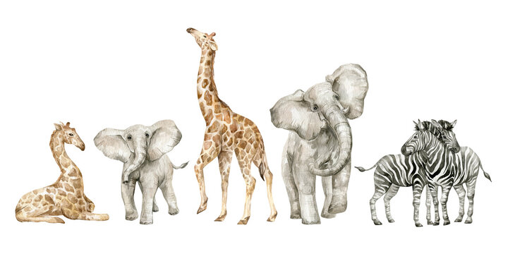 Watercolor set with wild savannah animals. Giraffe, elephants, zebra. Cute safari wildlife animal
