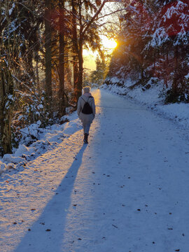 Woman hiking on snow in white winter forest berore the sunset. Recreation and healthy lifestyle outdoors in nature.