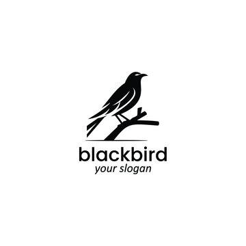 blackbird logo vector
