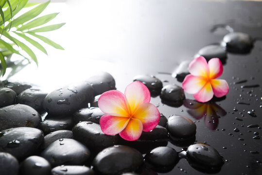 spa still life of with  two frangipani ,green palm and zen black stones ,wet background
