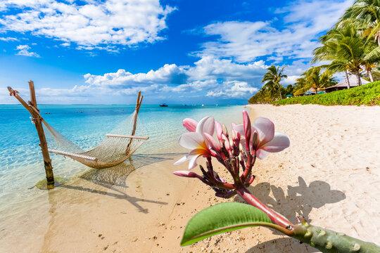 Plumeria et hamac sur plage du Morne Brabant, île Maurice