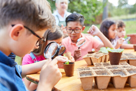 Children look at plants through a magnifying glass