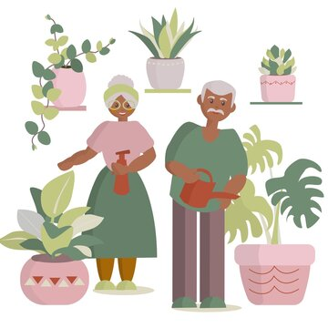 African american Senior couple watering houseplants Vector cartoon illustration