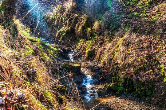 Wandern auf dem Wiedweg im Westerwald