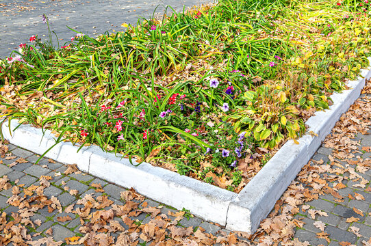 Flower bed with different colorful flowers and dry fallen leaves