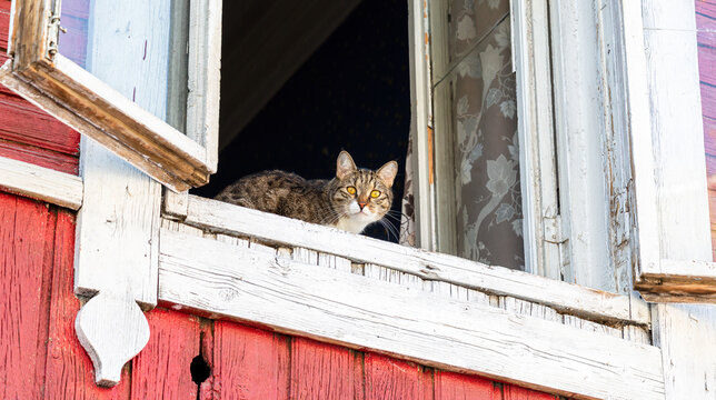 Cat watching from the old window