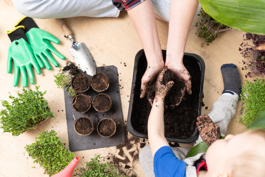 Top view of a mother and child preparing soil for seeds. Hobbies at home and learning botany.