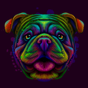The bulldog. Abstract, neon portrait of an English bulldog in watercolor style on a dark purple background. Digital vector graphics.