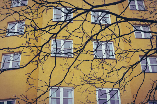 Yellow house behind the branches.