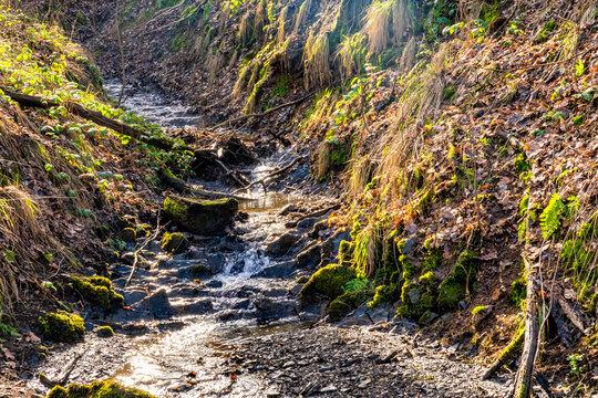 Rinnsal am Wiedweg im Westerwald
