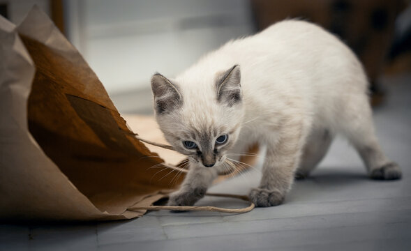 A small kitten is playing with a paper bag.