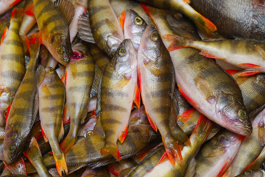 River perches carcasses prepared for cooking