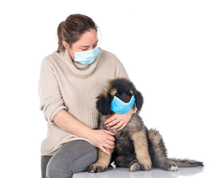 puppy Leonberger and woman