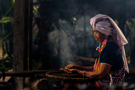 Hill tribe women sorting coffee beans. Old Woman selecting roasted coffee bean. Thailand.