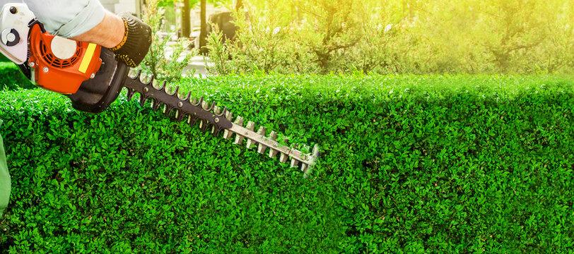 Garden gasoline scissors, trimming green bush, hedge. Working in the garden.