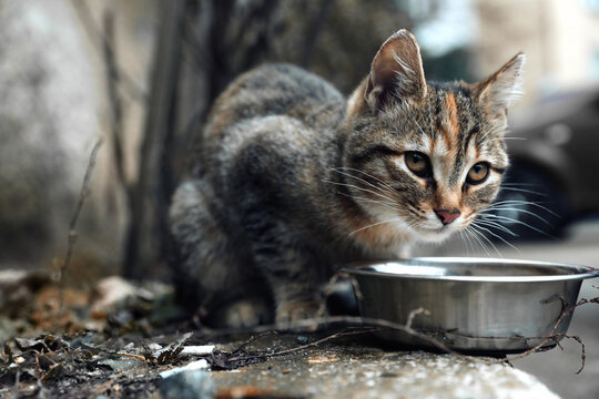 Lonely stray cat feeding outdoors. Pet homelessness problem