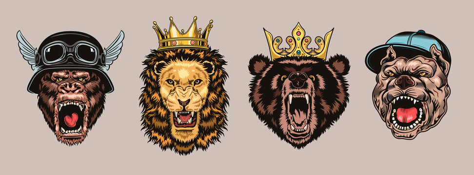 Animal angry characters set. Gorilla in biker helmet, lion and bear in riyal monarch crown, bulldog in gangster cap with open jaws. Vintage vector illustrations isolated on white background