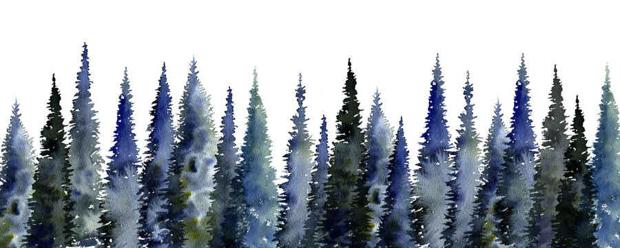 watercolor drawing fir trees