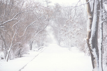 Snowy forest with snow falling in winter. Pure snowy forest nature. Winter foggy forest scene. Fotobehang