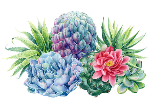 Watercolor succulents bouquet., watercolor botanical painting, card with green plants