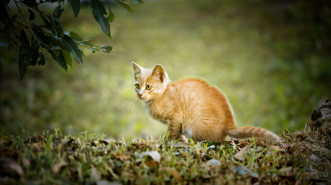 Cute red kitten sitting in the grass. Happy pet concept, web banner.