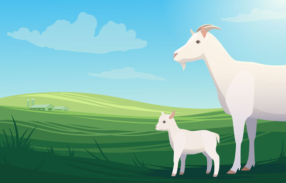 Vector illustration landscape with cow and little baby goat on pasture with ranch on the background. Scenery of farm on green fields, bright and natural.