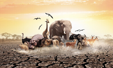 Group of many African animals giraffe, lion, elephant, monkey and others on the dry dead drought soil