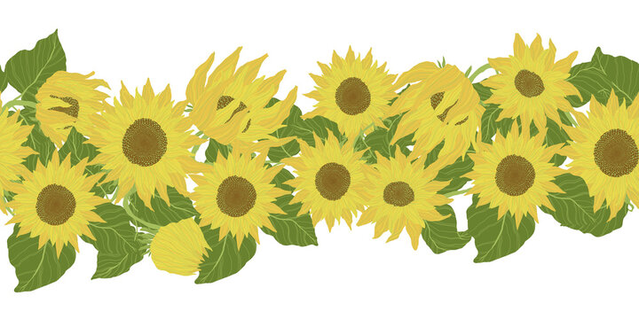 Horizontal seamless border with yellow sunflowers and green leaves. Vector cartoons illustration in flat design.