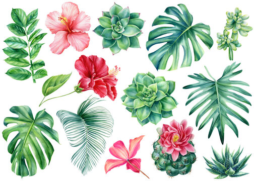 Set Tropical flowers and leaves on isolated white background, watercolor painting, invitation cards