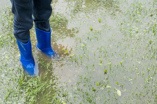 The child stands in the garden in the water, feet in rainfoot. The garden is flooded. Consequences of downpour, flood. Rainy summer or spring