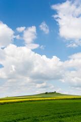 żółte i zielone pola, pagórek, błękitne niebo z białymi obłokami