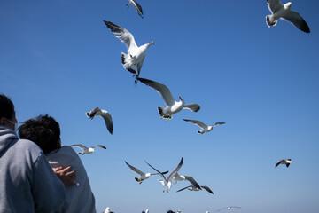 배 위에서 먹이를 받아먹는 갈매기(Seagull feeding on a boat) Fotobehang