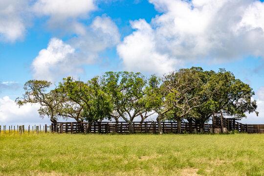 Wood Cattle crush in farm field
