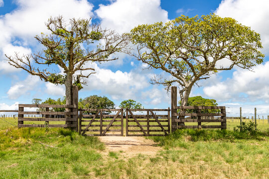 Farm wood gate with trees and iron fence