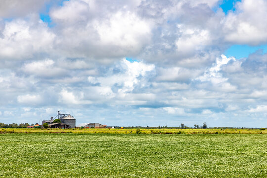 Soy plantation in farm field and clouds