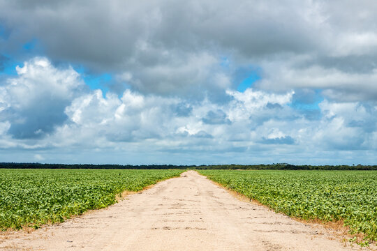 Soy plantation and dirty road