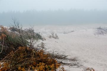 Krajobraz nadmorski we mgle rośliny rosnące na wydmach