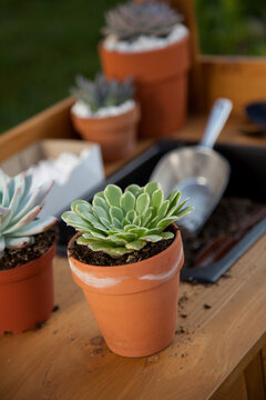 Planting Succulent Plants