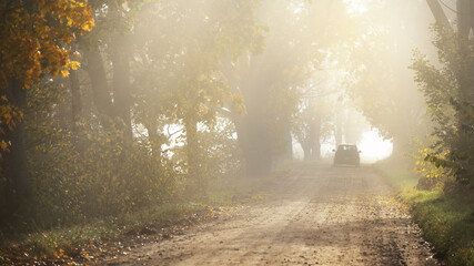 Single lane rural road (alley) through deciduous oak and maple trees. Natural tunnel. Sunlight,...