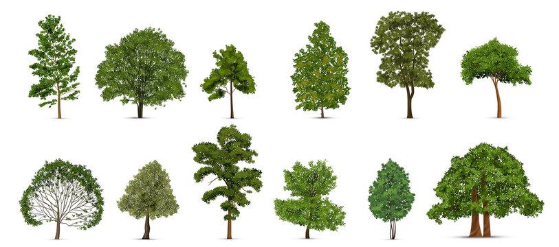 Realistic Trees Icon Set