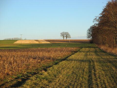 Landleben - Wald Wiese Felder Acker Bäume Wanderweg