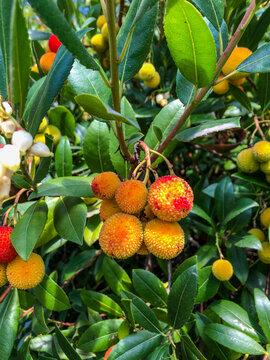 Soapberries
