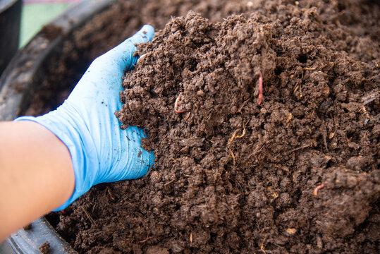 Organic fertilizers with worm AF.