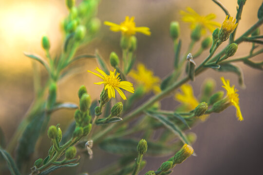yellow flower blooming in the wild nature
