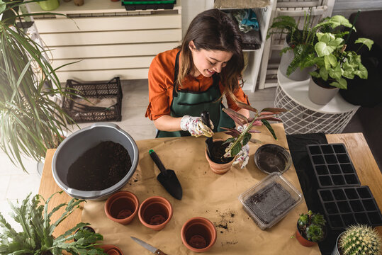 Young woman potting a plant at home. Engaging leisure activities. Indoor gardening.