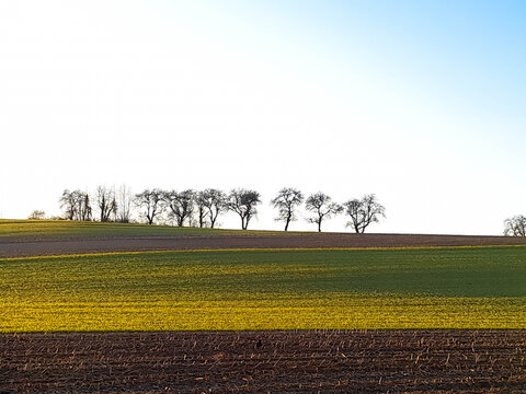 Panoramic view of agricultural fields with trees in a row in the background. Space for text. Grand Est, Alsace, France.